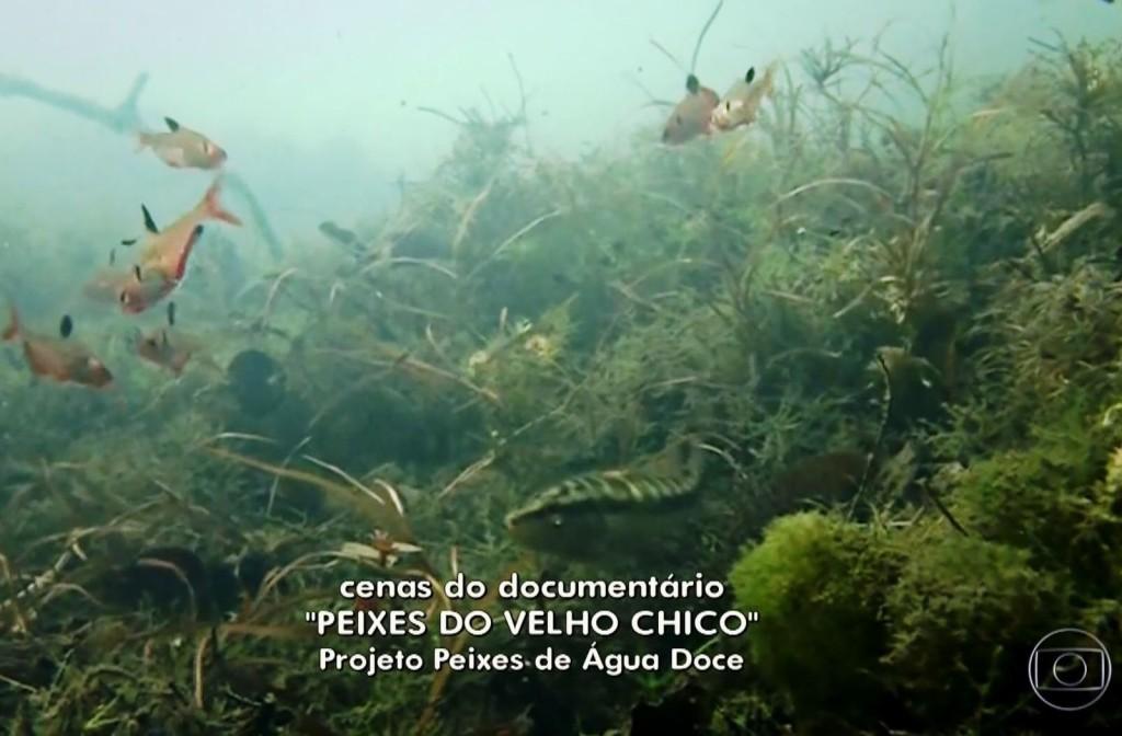 Projeto Globo Rural